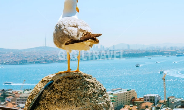 Istanbul Holiday